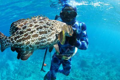 A grouper taken freediving