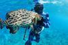 A grouper taken freediving